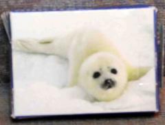 Mini Puzzle Tiere der Arktis